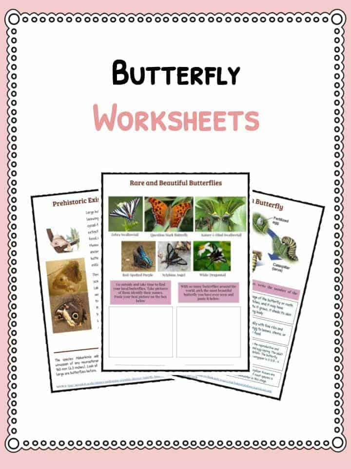 Butterfly Facts, Information & Worksheets For Kids