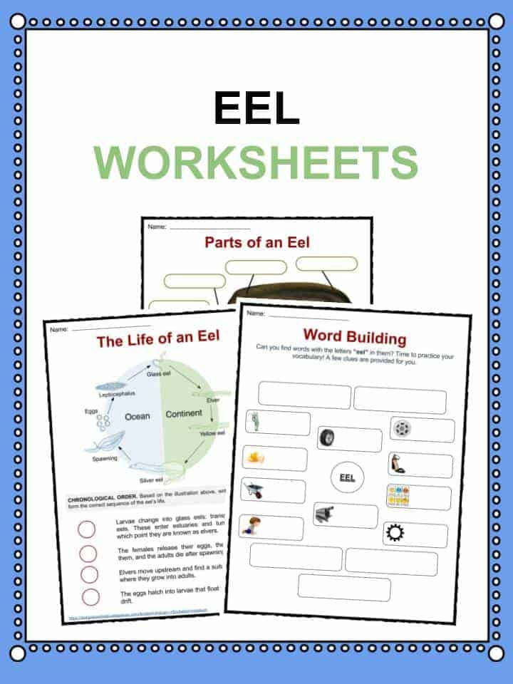 Eel Worksheets
