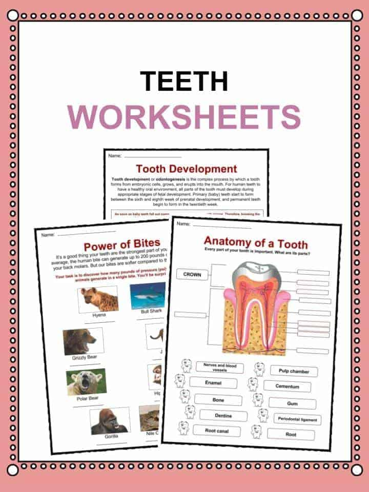Teeth Facts, Worksheets & Information For Kids