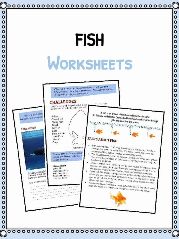 Fish Facts and Worksheets | KidsKonnect