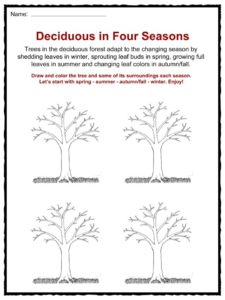 science of the seasons how do trees change worksheet science best free printable worksheets. Black Bedroom Furniture Sets. Home Design Ideas