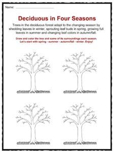 deciduous forest biome facts worksheets information for kids. Black Bedroom Furniture Sets. Home Design Ideas