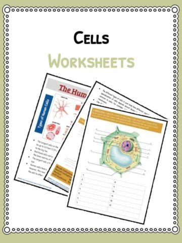 cells-worksheet