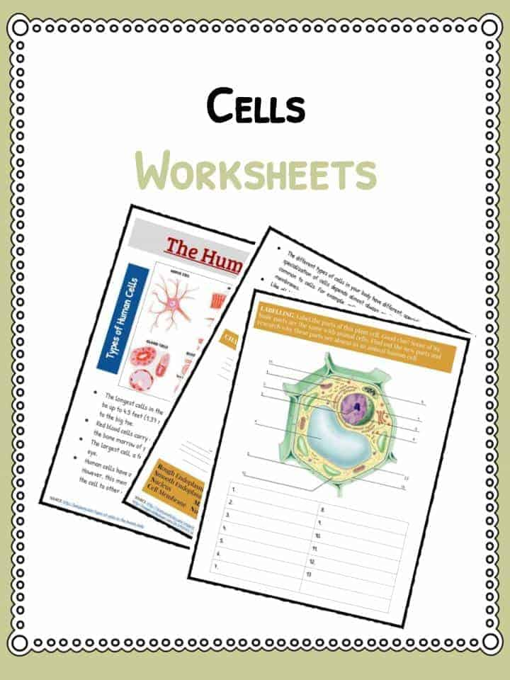 Cell Facts Information Worksheet Animals Human Plants