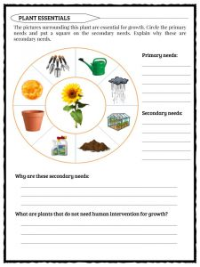 Photosynthesis Facts, Information & Worksheets For Kids