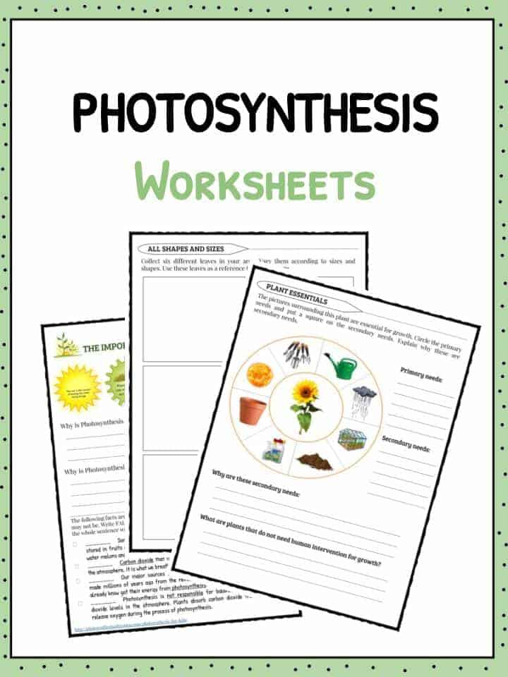 Photosynthesis Facts Information Worksheets For Kids – Photosynthesis Diagram Worksheet