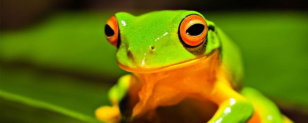 Frog Facts, Worksheets & Information for Kids