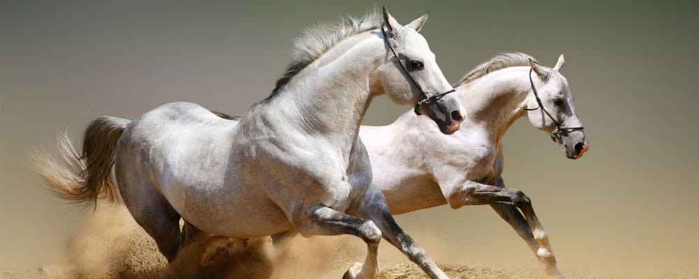 Horse Facts and Information for Kids • KidsKonnect