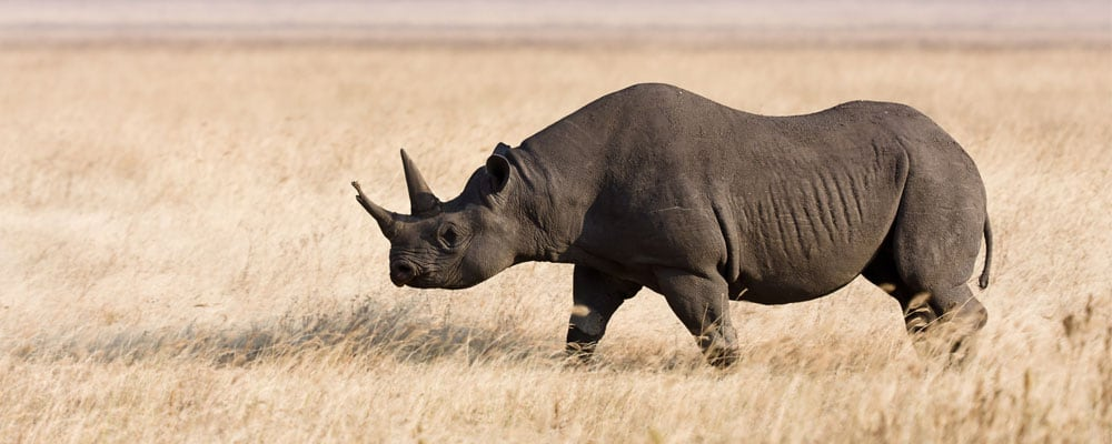 Rhinoceros facts and information