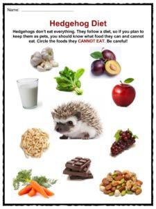 Food Hedgehogs Eat