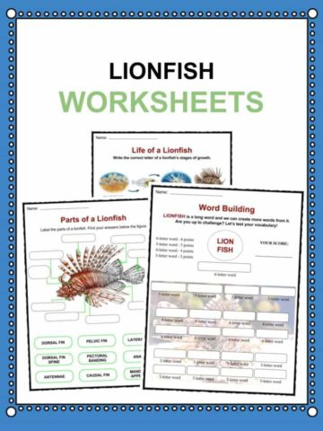Lionfish Worksheets