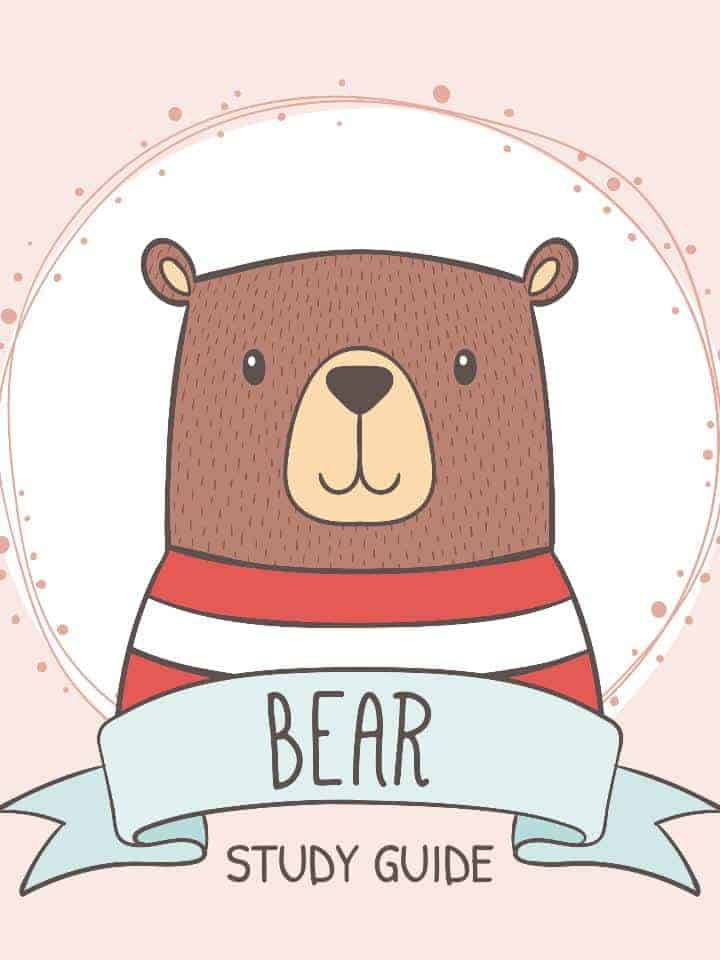Bear Facts, Information & Worksheets | Teaching Resource