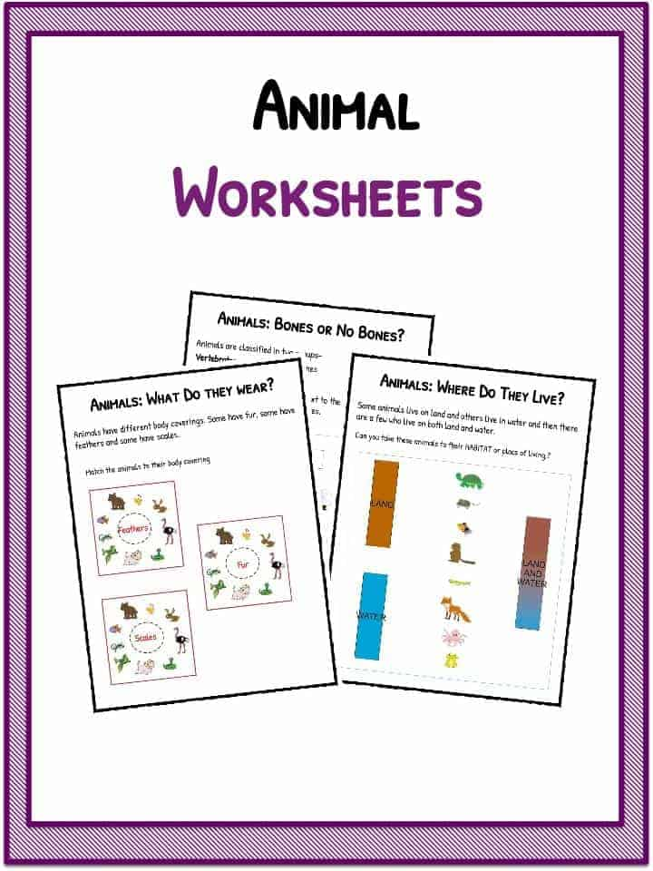 Animal Worksheets – Animal Worksheets