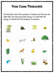Food chain worksheets pdf downloadable lesson resource food chain worksheets ibookread PDF