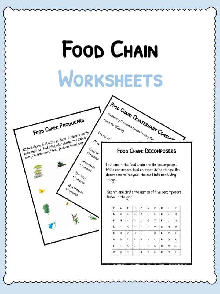 Food Chain Facts – Producers Consumers and Decomposers Worksheet