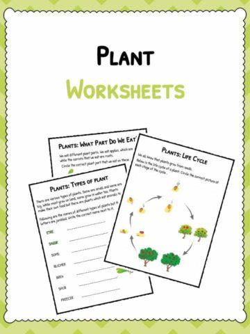 photosynthesis facts information worksheets for kids. Black Bedroom Furniture Sets. Home Design Ideas