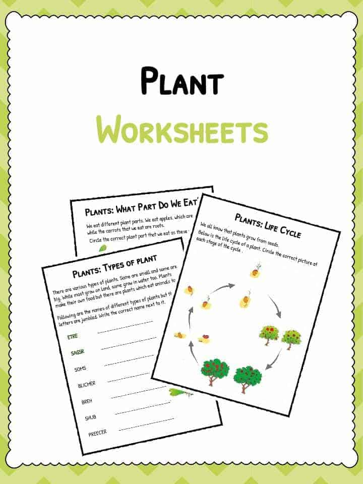 Plant Worksheets Plant Life Cycle Worksheet – Parts of a Plant Worksheet