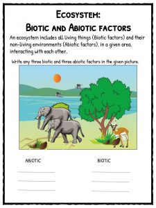 Ecosystem Worksheets | Biotic, Abiotic Lesson Resources