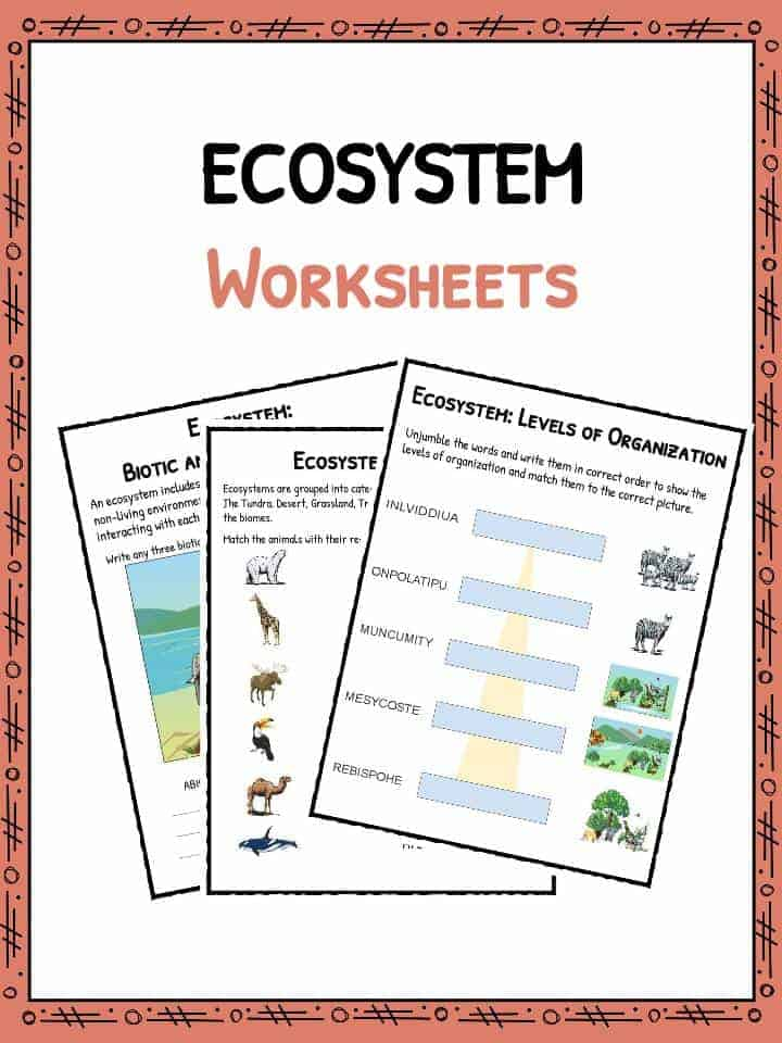 Ecosystem Worksheets – Levels of Organization Worksheet