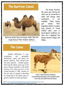 essay on camel the ship of the desert Camel ship of desert essay an essay on death published in the remaines of the right the asahi shimbun is widely regarded for its journalism as the most.