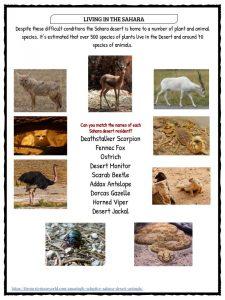 Sahara Desert Facts Worksheets  Historical Information For Kids
