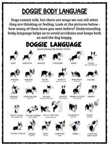 Dog Facts &, Information & Worksheets For Kids   Breeds, Types & More