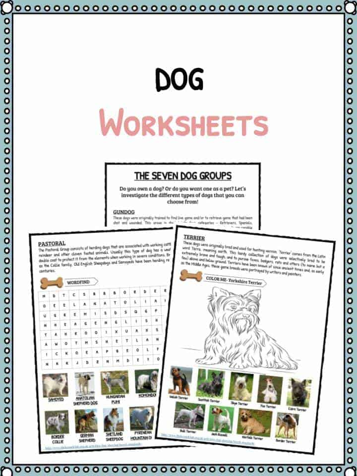 Dog Facts &, Information & Worksheets For Kids | Breeds, Types & More