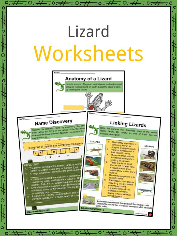 Lizard Worksheets