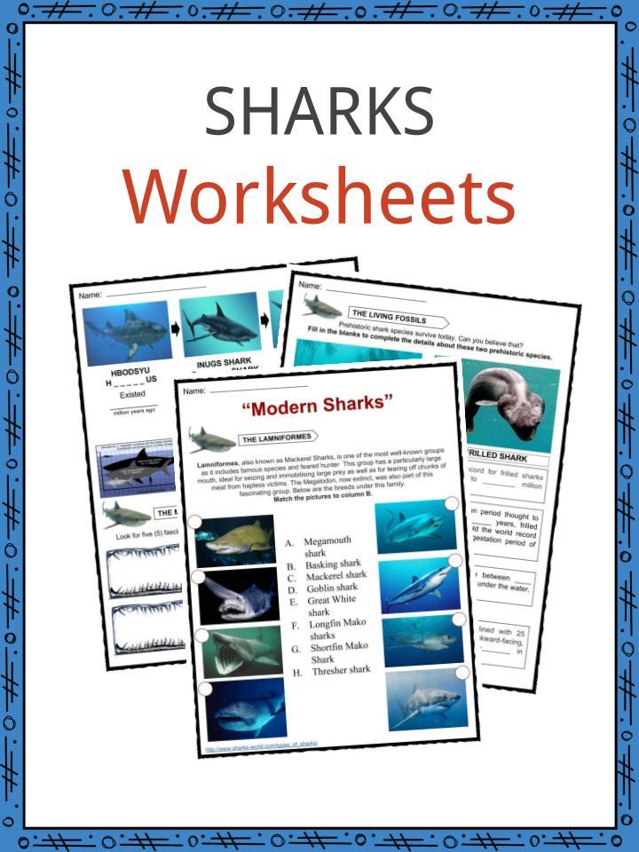 SHARKS Worksheet