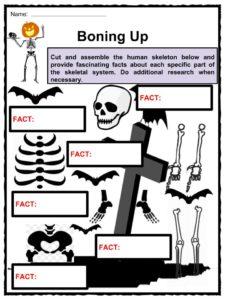 Label the Skeleton Worksheet - Homeschool Helper   Homeschool ...