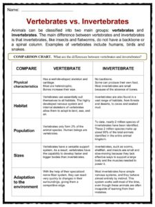 photo regarding Free Printable Worksheets on Vertebrates and Invertebrates named Invertebrate Data, Worksheets, Versions Specie Written content