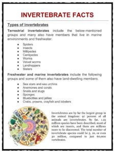 photograph about Invertebrates Worksheets Free Printable called Invertebrate Data, Worksheets, Models Specie Content