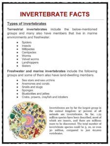 photograph regarding Invertebrates Worksheets Free Printable named Invertebrate Info, Worksheets, Layouts Specie Articles