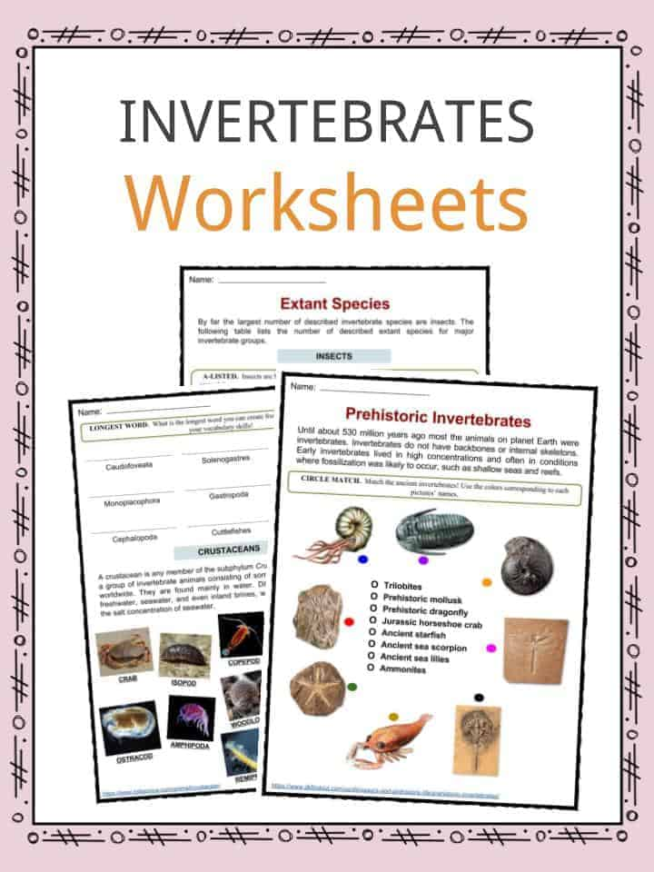 picture relating to Invertebrates Worksheets Free Printable identify Invertebrate Information, Worksheets, Models Specie Written content