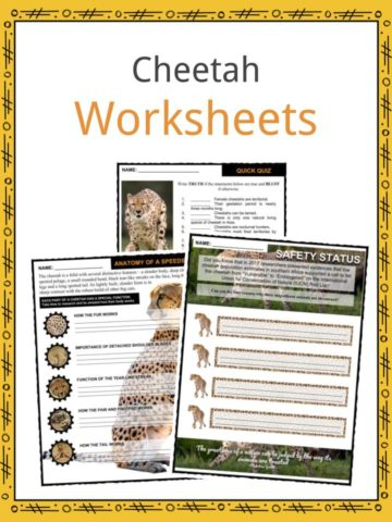 Cheetah Worksheets