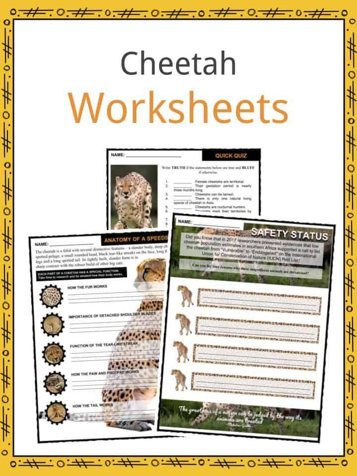 Cheetah Worksheets