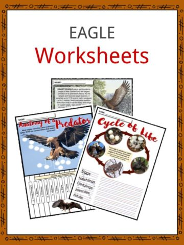 EAGLE Worksheets