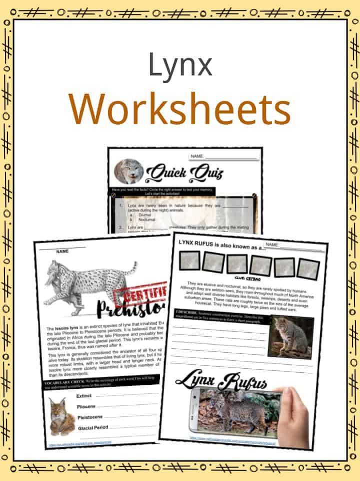 Lynx Worksheets