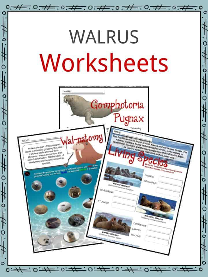 WALRUS Worksheets