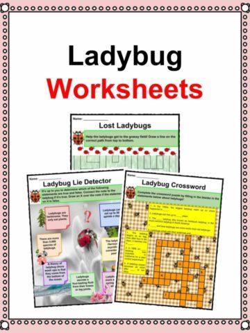 Ladybug Worksheets