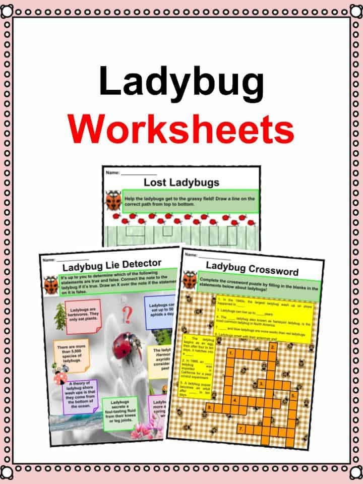 The Ladybug Facts Worksheets