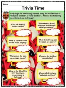 Ladybug (Ladybird) Facts, Worksheets, Habitat & Species ...
