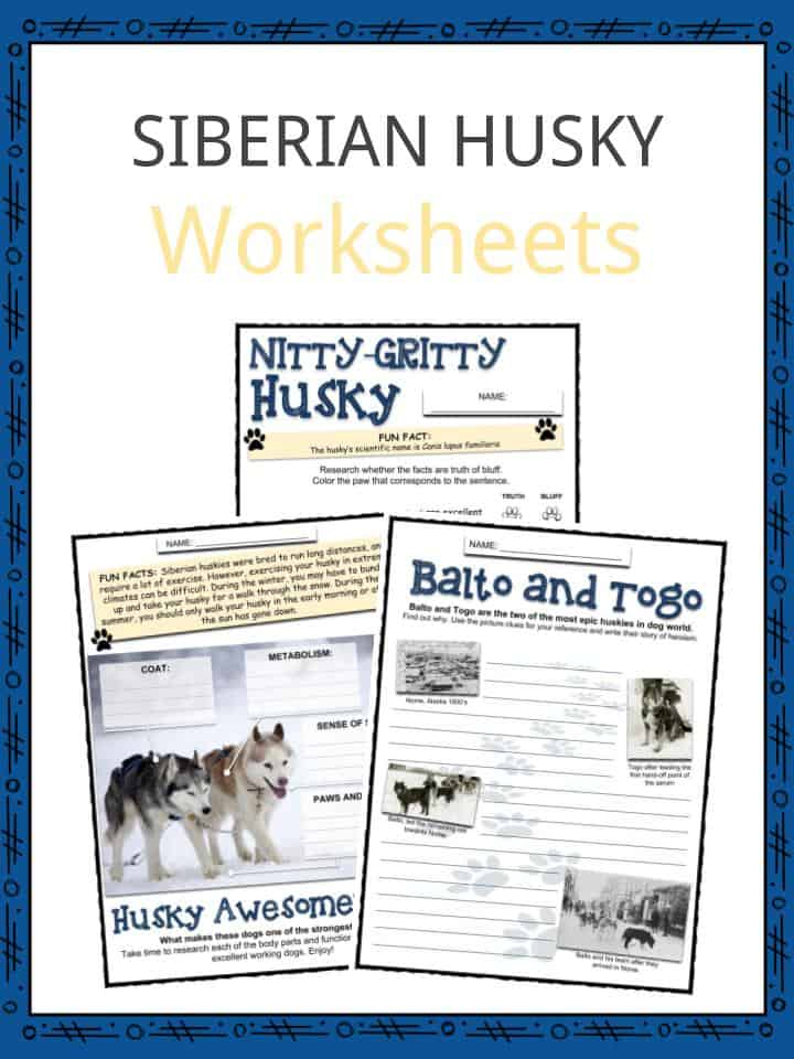 SIBERIAN HUSKY Worksheets