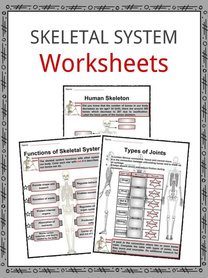 Download the The Skeletal System Facts   Worksheets d737f49a54d