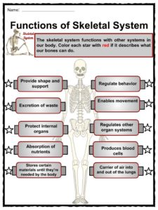 The Skeletal System Facts, Worksheets, Bone Types & Diseases ...