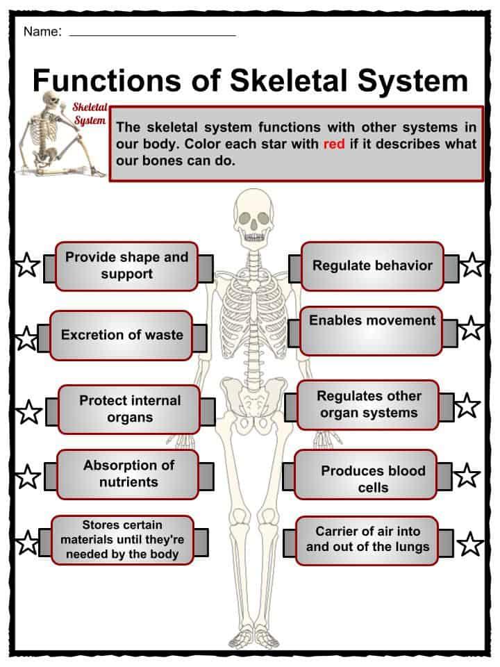 All About Skeletal System For Kids Skeletal System Facts Www