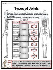 The Skeletal System Facts, Worksheets, Bone Types & Diseases For Kids