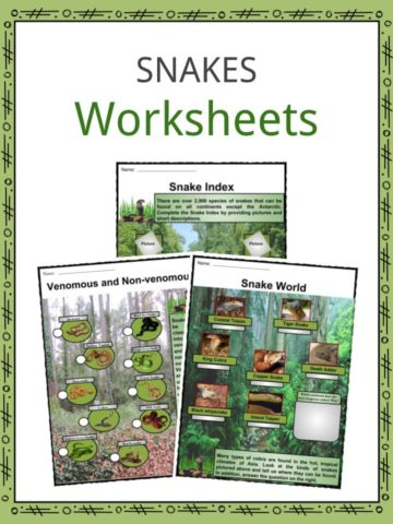 Snakes Worksheets