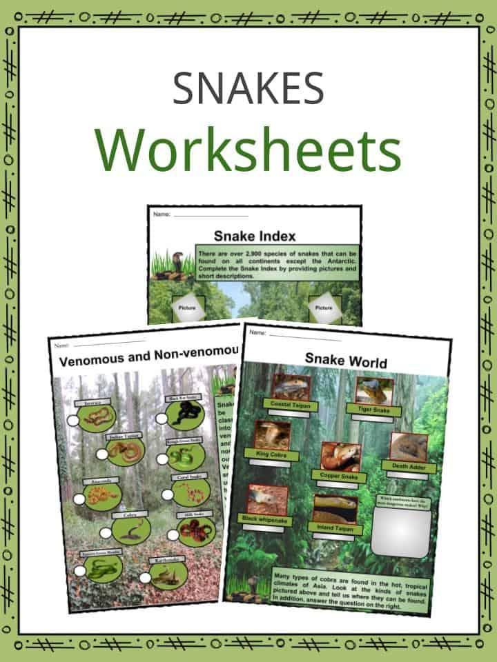 Snakes Worksheets