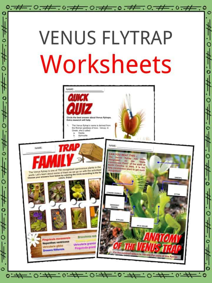 VENUS FLYTRAP Worksheets